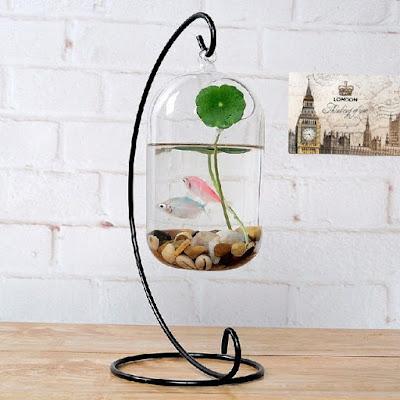 Aquarium Cupang Bulat