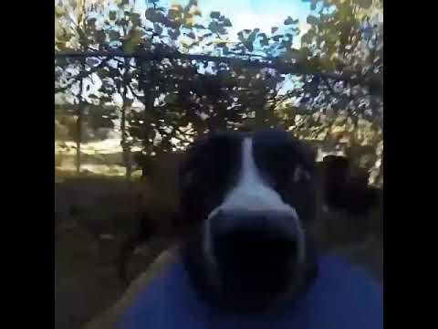 Bonnie, A Genius Dog, Went Viral When She Stole Her Owner's GoPro