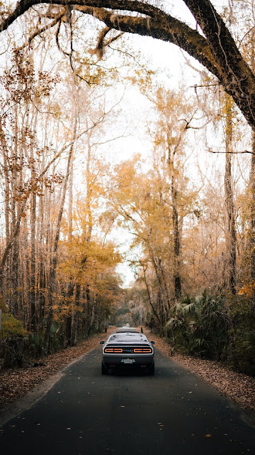 HD Wallpaper Car, Road, Asphalt, Tree, Rear view