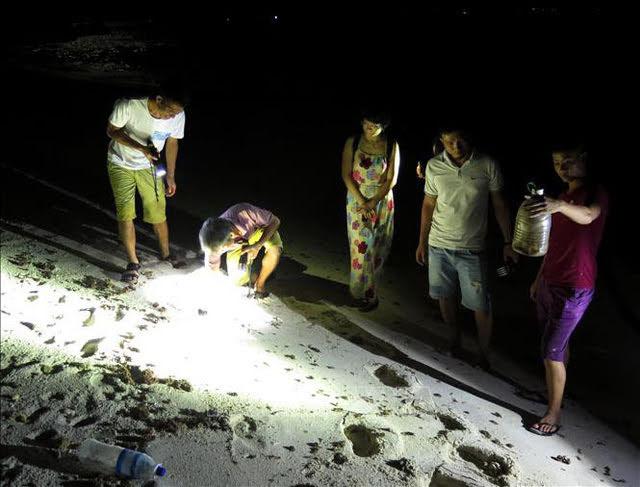 Dụng cụ chính để săn cua, còng là đèn pin pha.