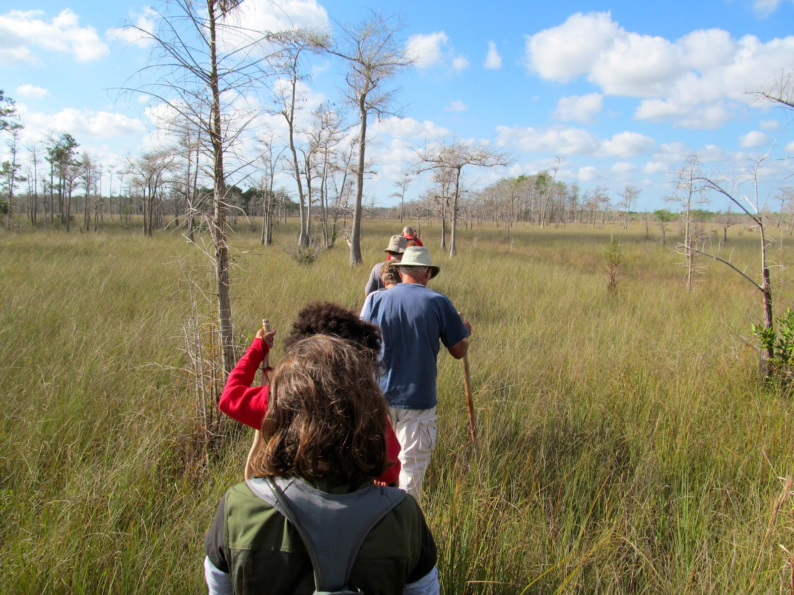 Cypress Sawyer Historic HIke - Big Cypress Swamp - Florida Everglades - Hiking