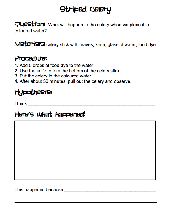 student sheet for striped celery experiment