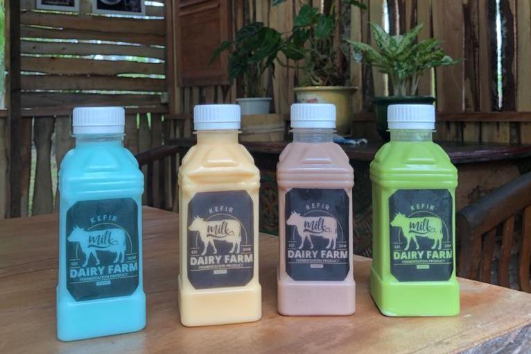 Firman Shomadi Kenalkan Susu Kefir di Lumajang