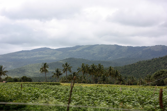 Forested hill slopes of BRT tiger reserve between Lokkanahalli and Bailur villages on the Kollegal - Hasanur ghat road.