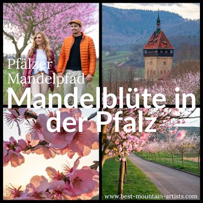 Pfälzer Mandelpfad | Etappe 05 Edenkoben – Birkweiler | Wandern Südliche Weinstraße | Mandelblüte Pfalz 24