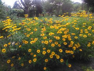 Zółte kwiatki