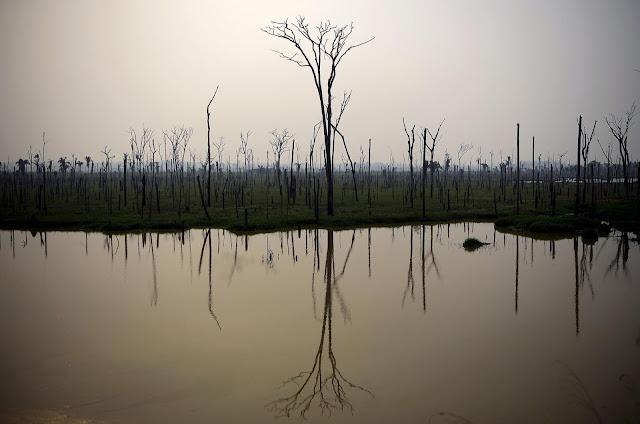 Jenis-Jenis Ikan Yang Hidup Di Sungai Amazon