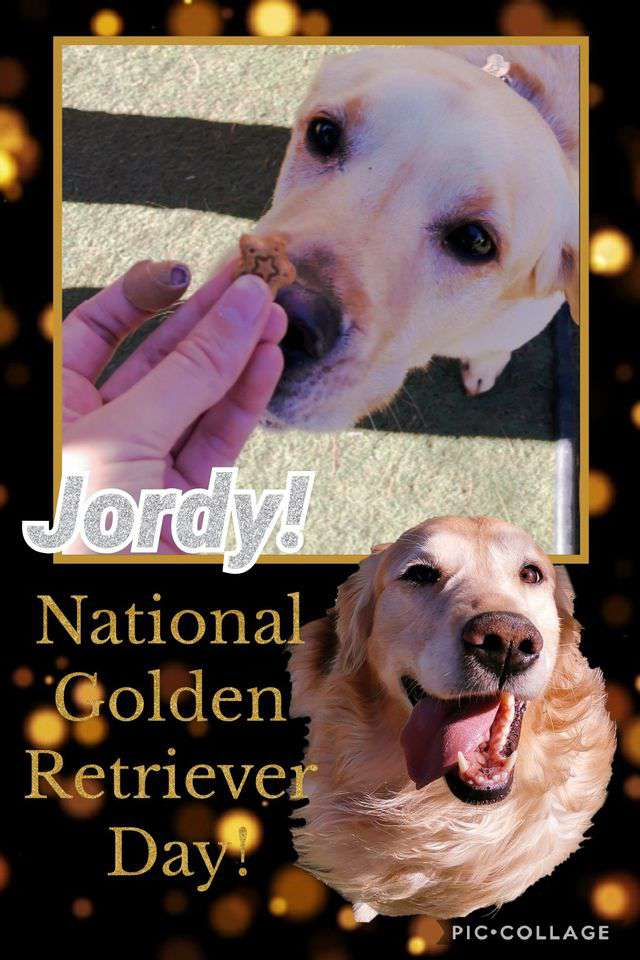 National Golden Retriever Day Wishes For Facebook