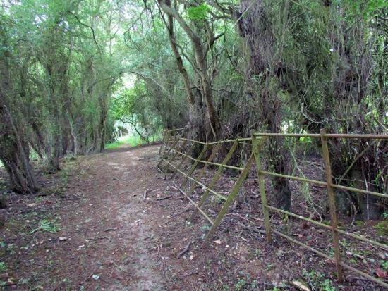 Image for Walk 17: Hornbeam Lane Loop taken by Hertfordshire Walker and released under Creative Commons