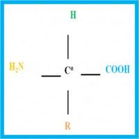 Amino acid General Structure