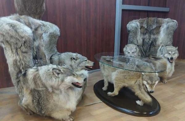 В Дагестане продают мебель из чучел волков! Жестокость по отношению к животным не имеет границ!!!