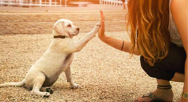 21 lecciones sobre las  mascotas. Por Alejandro Jodorowsky