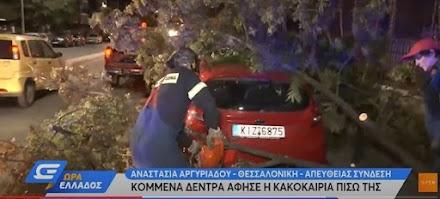 Θεσσαλονίκη: Κομμένα δέντρα άφησε πίσω της η κακοκαιρία (video)