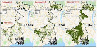 Mapping real-time rice-fallows in 2018 for supporting pre-planting decision making for pulse intensification in the state of West Bengal, India