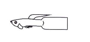 Gambar Bentuk Ekor Ikan Guppy Scarf Tail / Flag Tail