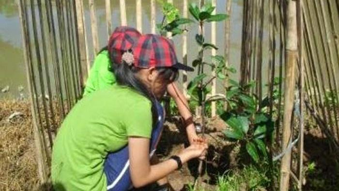 menanam mangga dari biji, cara menanam mangga harum manis, cara menanam mangga agar cepat berbuah, budidaya mangga harum manis, budidaya mangga madu, budidaya mangga gedong gincu, budidaya mangga pdf, cara menanam mangga dari biji