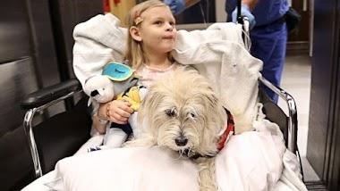importancia de las mascotas en la recuperación de los pacientes