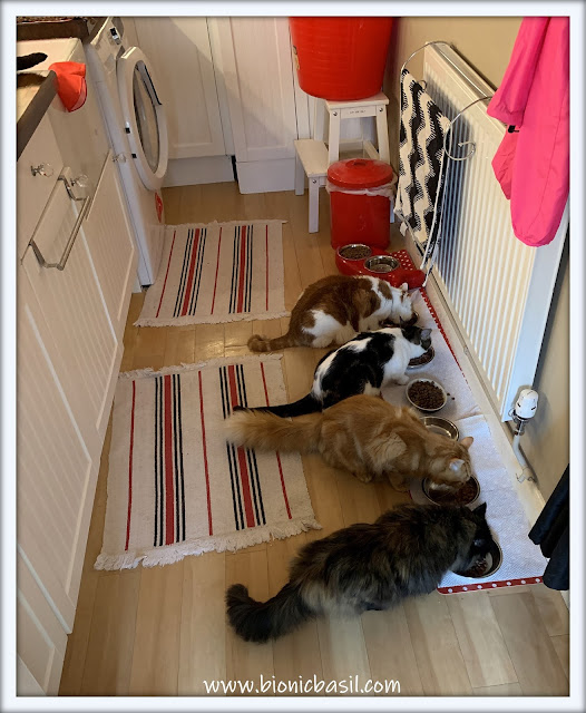 Top Tips For Cat Pawrents ©BionicBasil® The B Team Having Breakfast