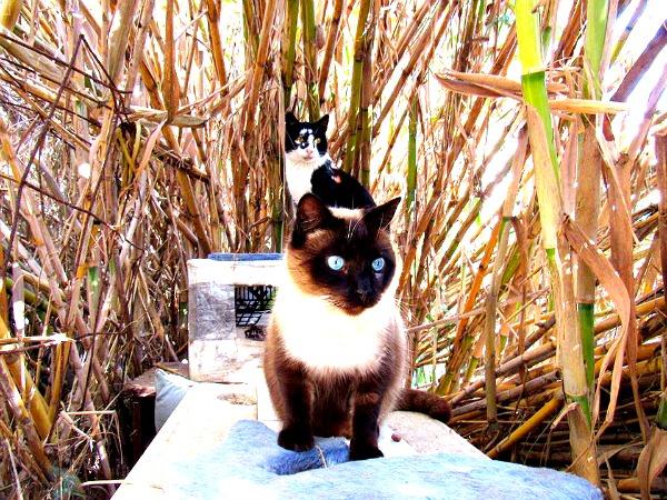 beach cats spain