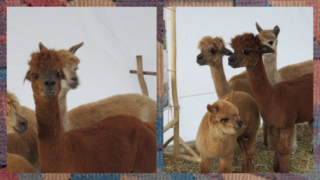 Weekend City Break in Vilnius Lithuania - Alpacas at the Fair of Nations