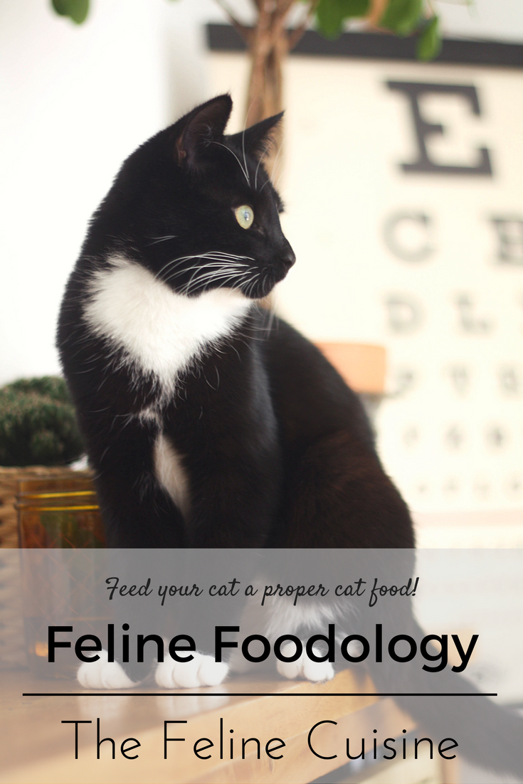 Feline Foodology: The Feline Cuisine menu