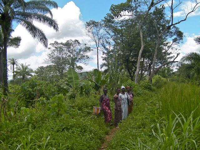 Vegetazione del Centro Africa