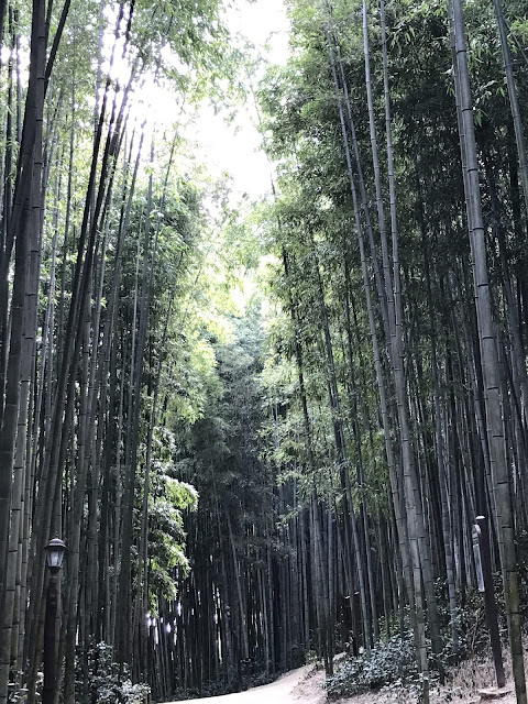 bamboo grove damyang