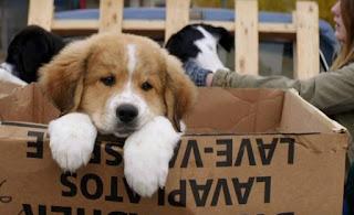 Perros en Tu mejor amigo