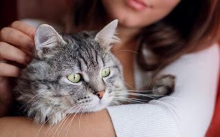 बिल्ली के नाम ▷ cat names list