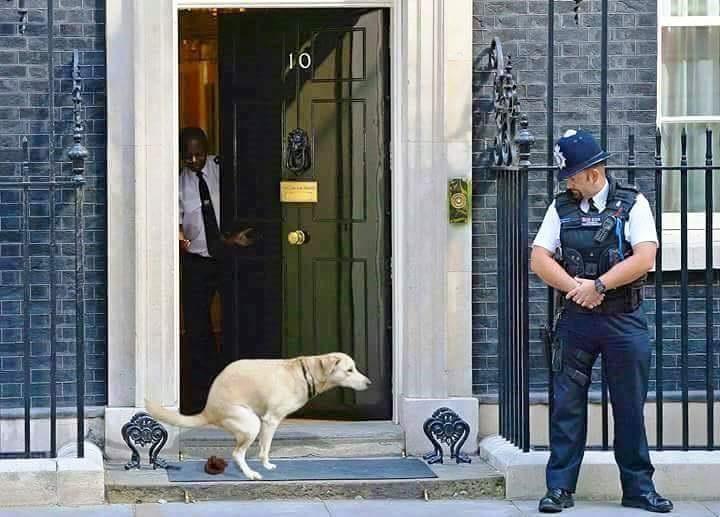فى بريطانيا يدعون الشرف والامانة وهم لصوص