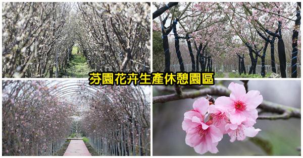 芬園花卉生產休憩園區,鴛鴦梅、河津櫻、洲府枝垂櫻