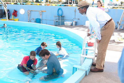 Dolphin Tale Pictures