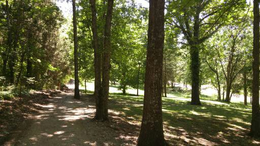 The walking trail at our local park has a lovely shaded area