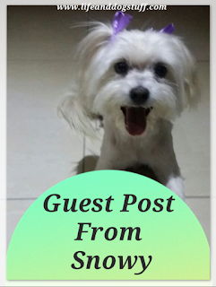 Guest Post From Snowy