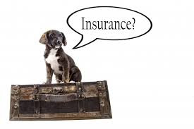 Pet Travel Insurance - A Must For Every Pet