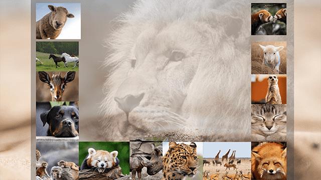 ✅El 4 de octubre día de los animales