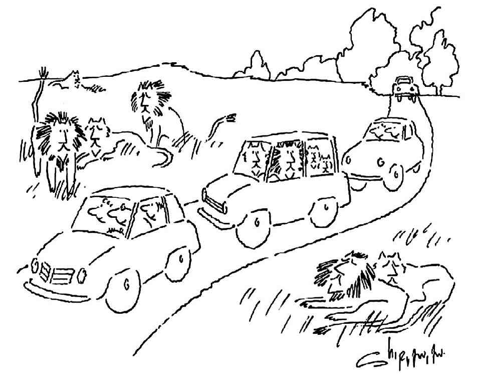 a 1984 National Lampoon Magazine cartoon about a lion family car-touring lions in the wild