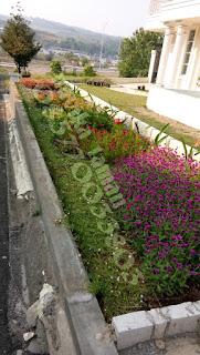 Tukang Taman Diciganjur | Jasa Renovasi Taman | Tukang Taman Murah