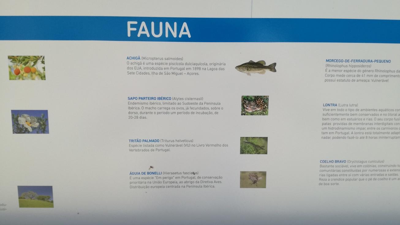 Fauna Barragem de Santa Clara