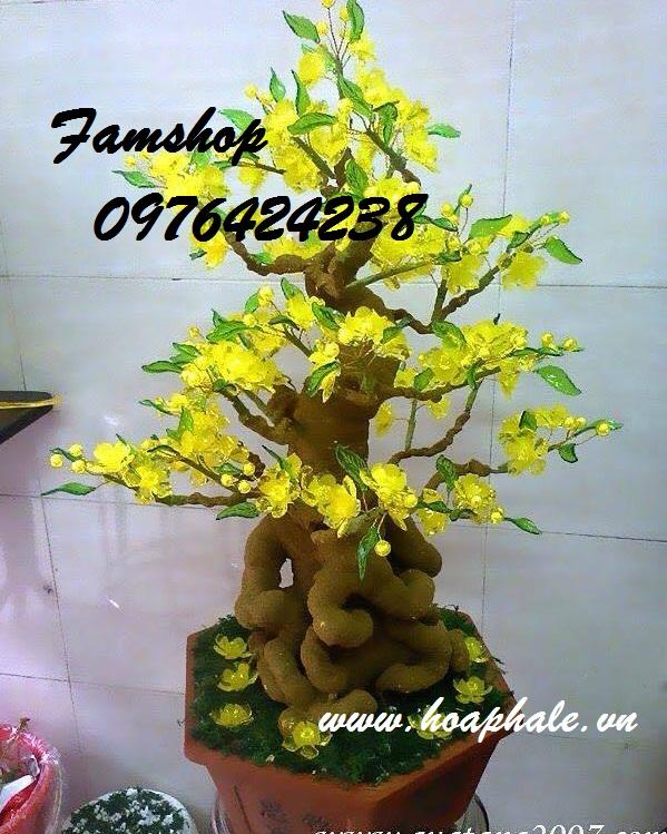 Goc bonsai mai dao o Phung Khac Hoan