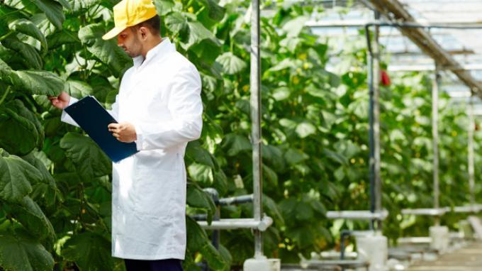 6 Prospek Kerja Agribisnis yang Cukup Menggiurkan