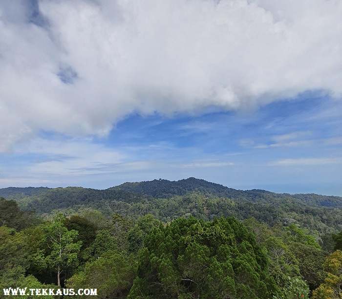 Curtis Crest Treetop Walk The Habitat Penang Hill Pictures