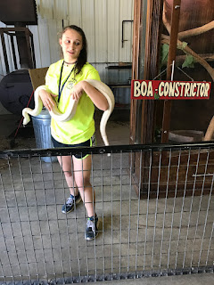 Boa Constrictor at Wild Wilderness Drive Through Safari in Gentry, Arkansas