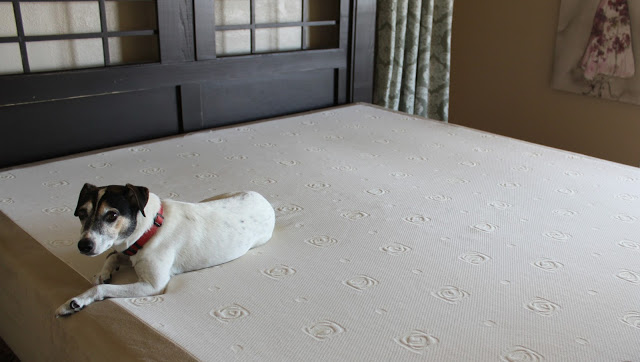 our dog was finally allowed on the bed - Amerisleep Revere