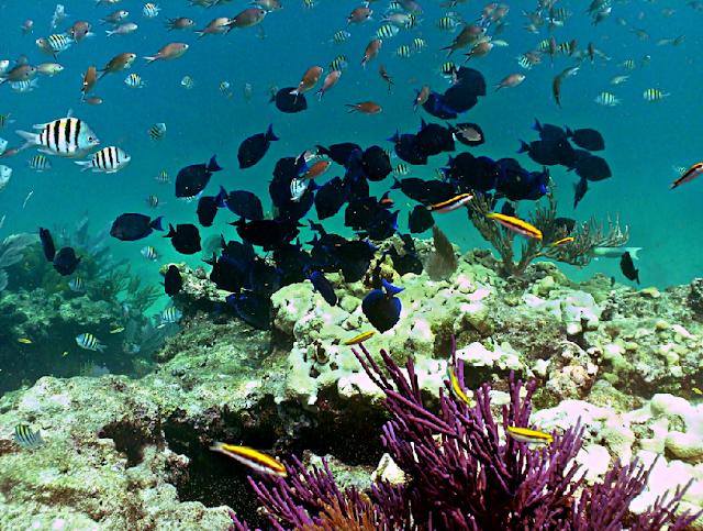 Looe Key National Marine Sanctuary em Miami