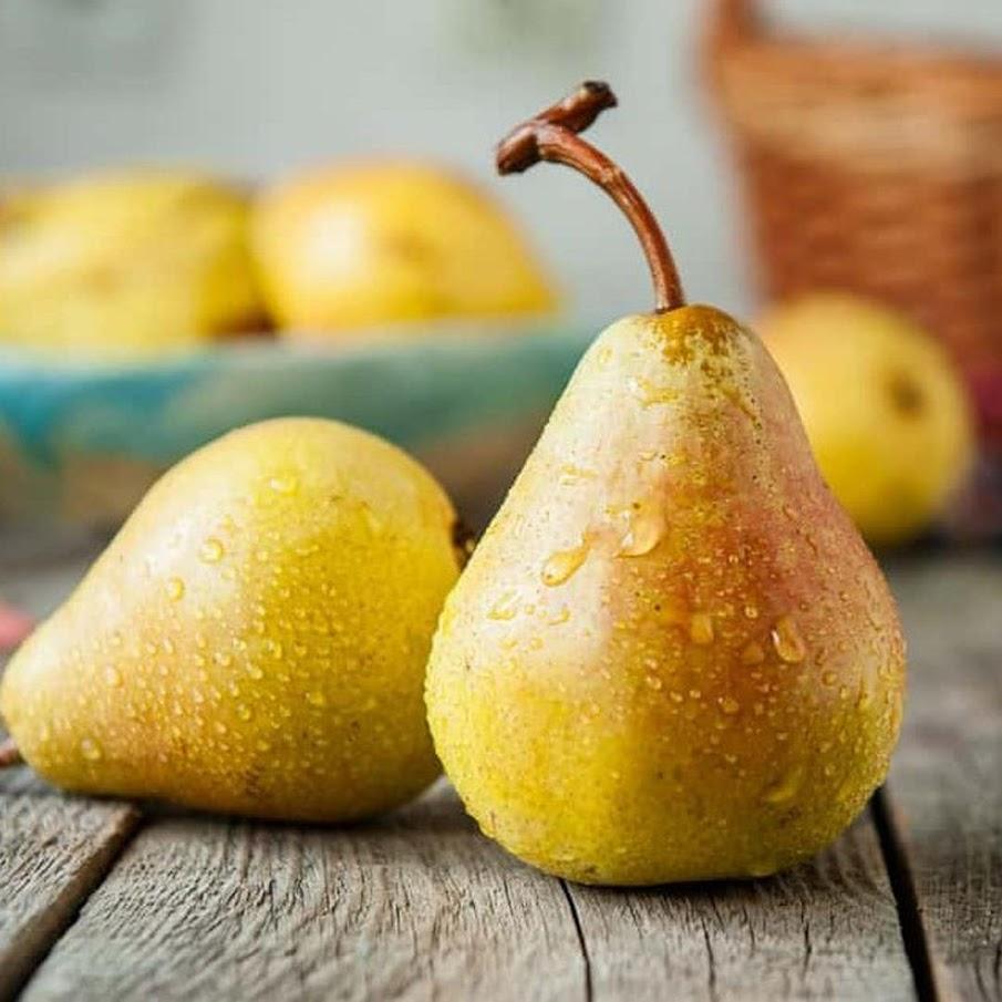 Bibit Benih Seeds Biji Buah Pir Common Pear Import Grow Your Own Fruit isi 20 biji Palangkaraya