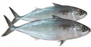 Mackerel fish in Malayalam