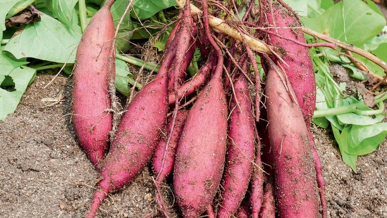 10 Benefícios da batata doce para a saúde do corpo