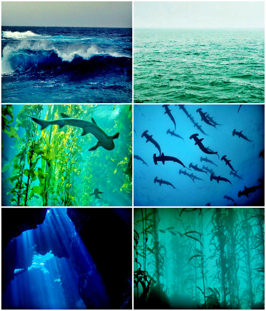 Ocean Shark Aesthetic: http://writtenbykanra.blogspot.com/2017/05/small-giveaway.html