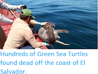 https://sciencythoughts.blogspot.com/2017/11/hundreds-of-green-sea-turtles-found.html